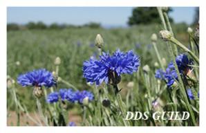 DDS-GUILD6