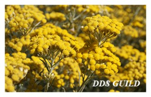 DDS-GUILD8